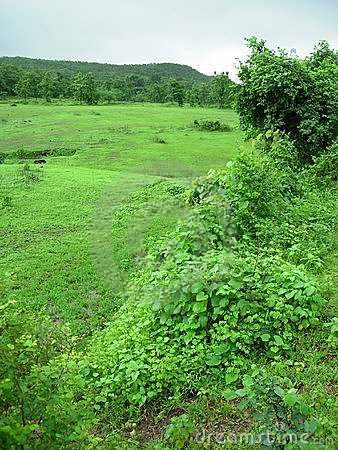Green countryside landscape