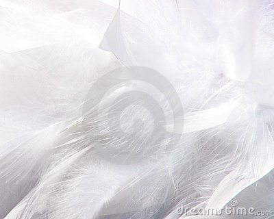 Fluffy feathers