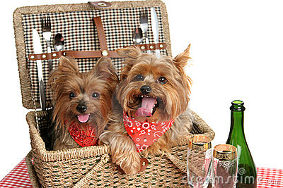 Picnic Basket of Puppies