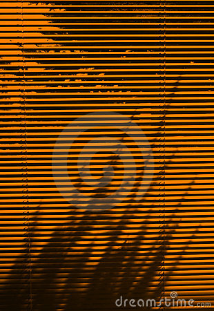Blinds and tree shadow