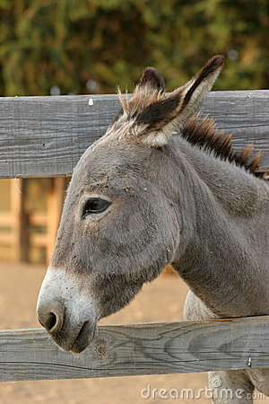 Donkey by the fence