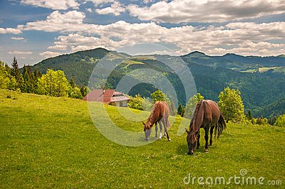 Grazing two horses at high-land pasture at Carpathian Mountains in rays of sunset.