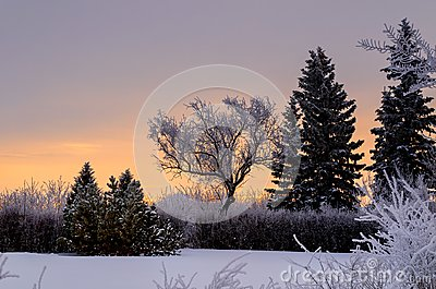 Frosty, snowy night with a purple sky, Christmas tree at night