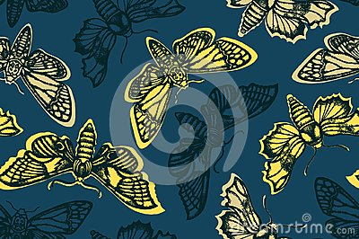 Seamless pattern with hawk moth. Night, glowing butterflies. Hand drawn.