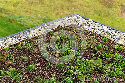 Detail of stones on extensive green living roof vegetation covered