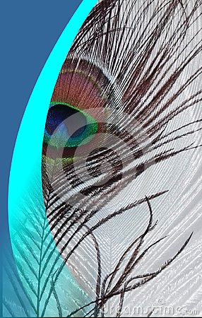 Peacock father with abstract vector blue shaded Background. Vector Illustration