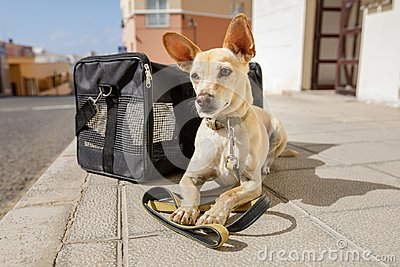 stock image of dog in transport box or bag ready to travel