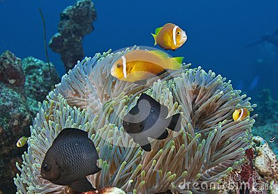 In the Maldives, underwater creatures, colorful fish dance with harmony