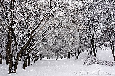 The trees in the Park in winter. It`s snowing