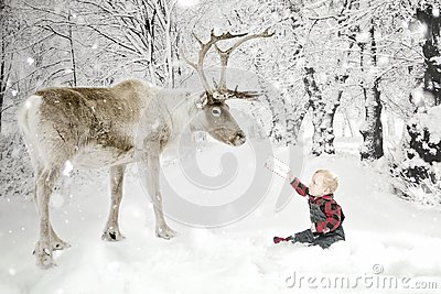 Toddler boy with Reindeer in snow