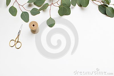 Creative composition made of green Silver dollar Eucalyptus cinerea leaves and branches, golden scissors and wooden
