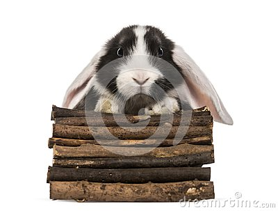 Rabbit getting out of a wooden box