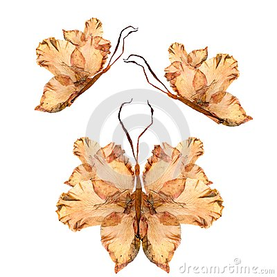 Floral butterfly made from bizarre curved extruded dried lily pe
