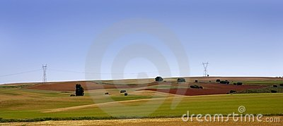 Golden and green cereal fields landscapes