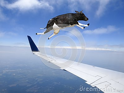 Funny Flying Cow, Plane, Travel