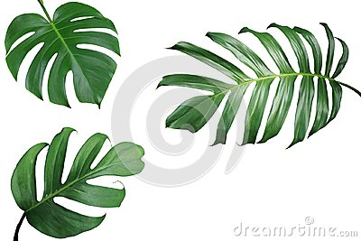 Tropical leaves nature frame layout of Monstera and split-leaf p