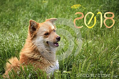 Happy New Year 2018! year of the yellow dog!