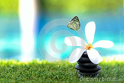 Butterfly flying near Thai Spa massage with rock spa and Plumeria flowers near swimming pool. Thailand. Healthy Concept
