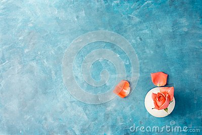 Top view flat lay Pink rose in white vase with petals on vibrant blue background