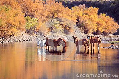 Wild Mustang Horses and Fall Colors