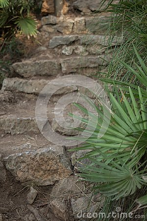 Stone steps in the middle of the park