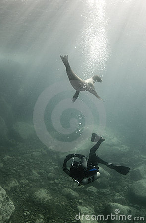 Diver and Sea Lion