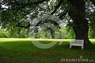 White park bench in the shade of a large tree