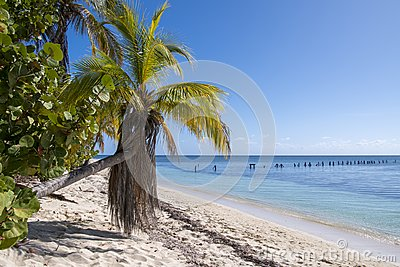 Tropical vegetation with bowed palm and clear sea