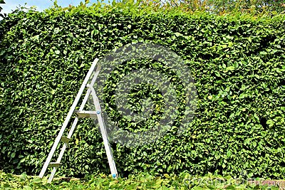 An Image of trimming a hedge, gardening