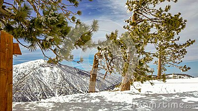 Snow Trees on Mountain Ridge In The Angeles National Forest, California