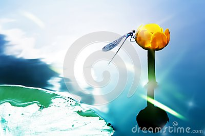 A blue dragonfly on a yellow water lily against the background of a watery surface. Artistic image.