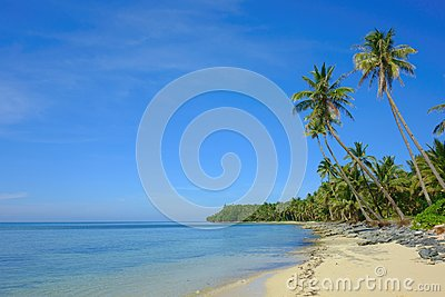 Philippine Beach with palm trees