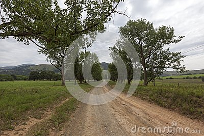 Gravel road lined with trees