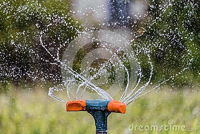Watering the garden using a rotation sprinkler. Gardening irrigation system close-up.