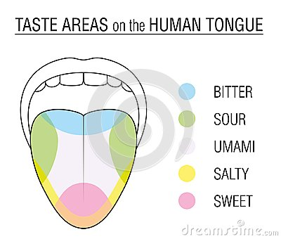 Taste Buds Colored Tongue Chart