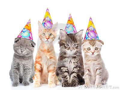 Large group of small cats with birthday hats. isolated on white