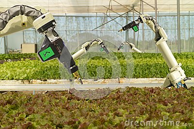 Smart robotic in agriculture futuristic concept, robot farmers automation must be programmed to work to spray chemical,fertilize