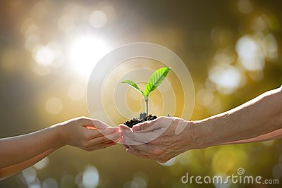 stock image of hands holding together a green young plant