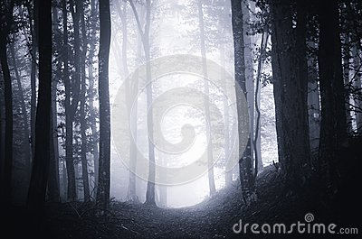 Path through dark moody forest with fog