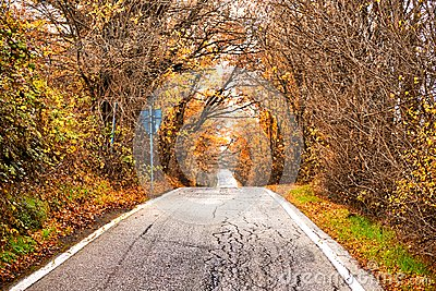 Road to vanishing point in fall colors