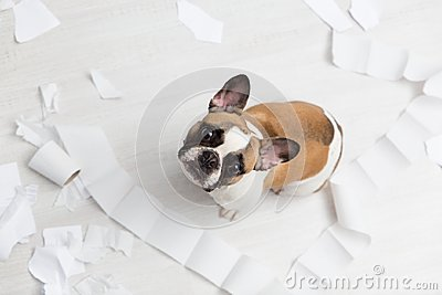Home pet destruction on white bathroom floor with some piece of toilet paper. Pet care abstract photo. Small guilty dog with funny