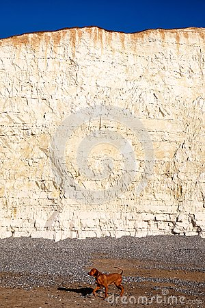 white chalk cliff face with pebble beach and dog walking on beach