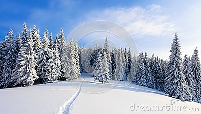 Winter landscape with fair trees under the snow. Scenery for the tourists. Christmas holidays.