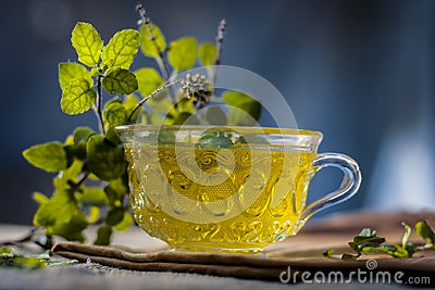 Tea of holy basil,tulsi,Ocimum tenuiflorum,in a transparent cup with leaves beneficial for heart diseases and stress.