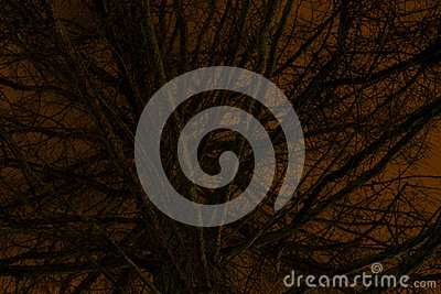Frightening Fir Tree in front of Orange Night Sky