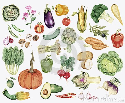 Collection of colourful vegetable illustration