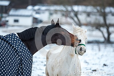 Two horses play together