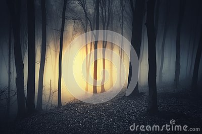 Mysterious light in dark haunted forest at night
