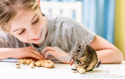 Young girl observe the degu squirrel