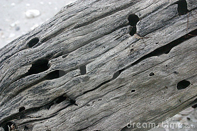 Drift wood texture